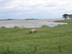 Landwirtschaft_250
